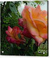 God's Roses Acrylic Print