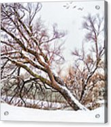 Going Softly Into Winter Acrylic Print