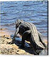 Going To Cool Off Acrylic Print