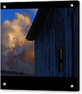 Going To Roost Acrylic Print