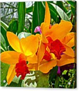 Gold And Red Orchids At Maerim Orchid Farm In Chiang Mai-thailan Acrylic Print