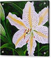 Gold Band Lily Acrylic Print