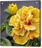 Gold Beauty Acrylic Print