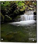 Gold Creek  Acrylic Print by Tim Rice
