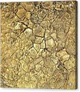 Gold Fever 1 Acrylic Print