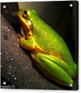 Gold Flake Frog Acrylic Print