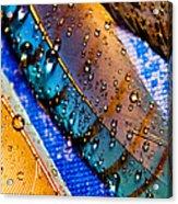 Gold Jay Feathers Acrylic Print