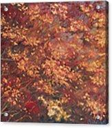 Gold Leaf 1 Acrylic Print