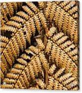 Gold Leaf Fern Acrylic Print