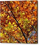Gold Leaves Of Autumn Acrylic Print