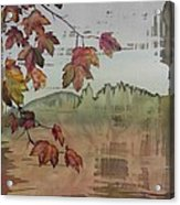 Gold Ridge Maple Acrylic Print by Carolyn Doe