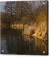 Golden Afternoon Reflections Acrylic Print
