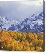 Golden Aspens With Mt. Sneffels Acrylic Print