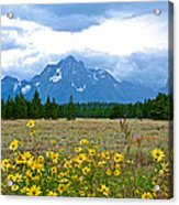 Golden Asters And Tetons From The Road In Grand Teton National Park-wyoming Acrylic Print