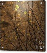 Golden Autumn Abstract Sky Acrylic Print