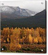 Golden Autumn - Cairngorm Mountains Acrylic Print