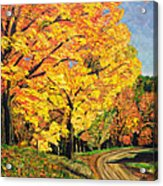 Golden Autumn Colors Acrylic Print