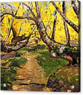 Golden Autumn - Drenova Acrylic Print