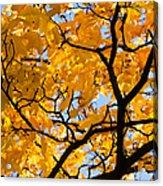 Golden Autumn - Featured 3 Acrylic Print