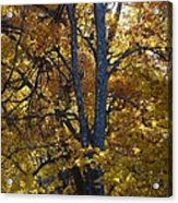 Golden Autumn Foliage At Palenville In October Acrylic Print