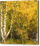 Golden Autumn Forest Mixed Media Painting Acrylic Print