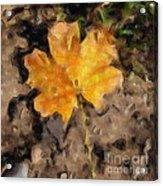 Golden Autumn Maple Leaf Filtered Acrylic Print