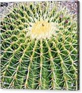 Golden Ball Cactus Acrylic Print