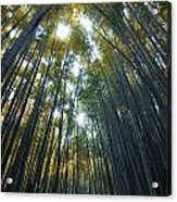 Golden Bamboo Forest Acrylic Print by Aaron Bedell