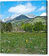 Golden Banner In Horseshoe Park In Rocky Mountain Np-co- Acrylic Print