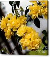 Golden Blooms One Acrylic Print