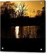 Golden Brown Acrylic Print by Dave Woodbridge