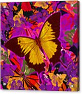 Golden Butterfly Painting Acrylic Print