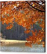 Golden Canopy Acrylic Print by Pauline Ross