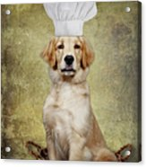 Golden Chef Acrylic Print by Susan Candelario