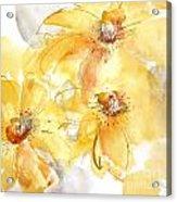 Golden Clematis 2 Acrylic Print