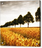 Golden Cornfield And Row Of Trees Acrylic Print