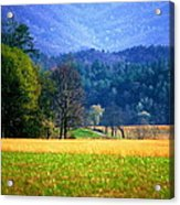 Golden Day Acrylic Print