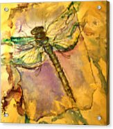 Golden Dragonfly Acrylic Print by M C Sturman