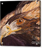 Golden Eagle Close Up Painting By Carolyn Bennett Acrylic Print