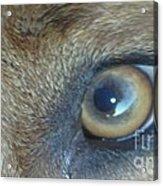 Golden Eye Of Norbu 12 18 2011 Acrylic Print