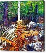 Golden Ferns Acrylic Print