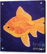 Golden Fish Acrylic Print