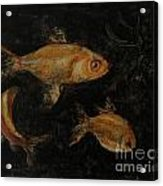 Golden Fishes Acrylic Print