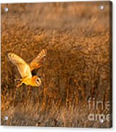 Golden Flight Acrylic Print