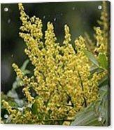 Golden Flora 2013 Acrylic Print