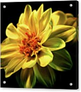 Golden Flower  Acrylic Print