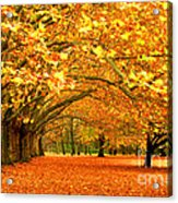 Golden Forest Acrylic Print by Boon Mee