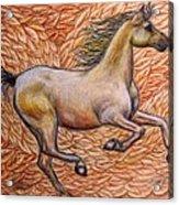 Golden Gallop Acrylic Print