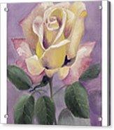 Golden Glory Acrylic Print by Nancy Edwards