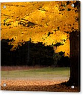 Golden Glow Of Autumn Fall Colors Acrylic Print